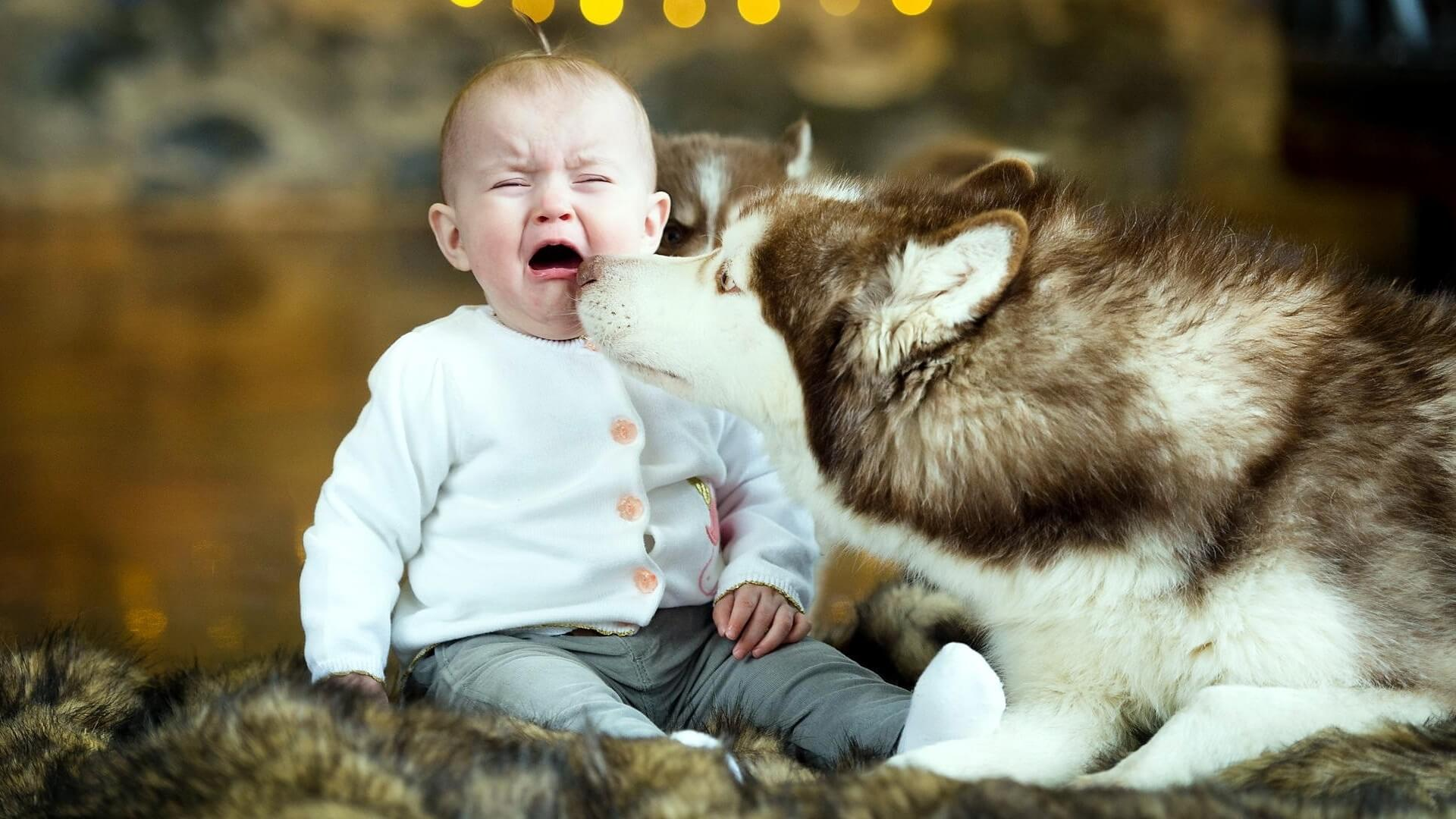 are siberian huskies good with kids