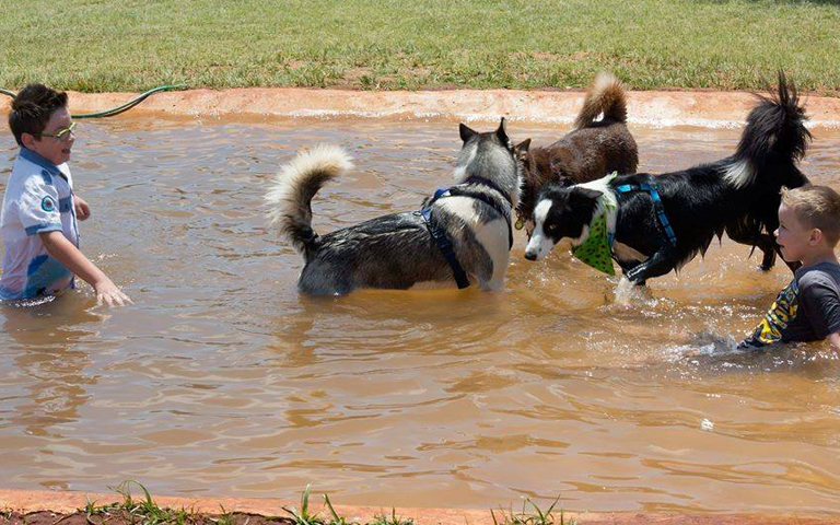 Husky Rescue South Africa