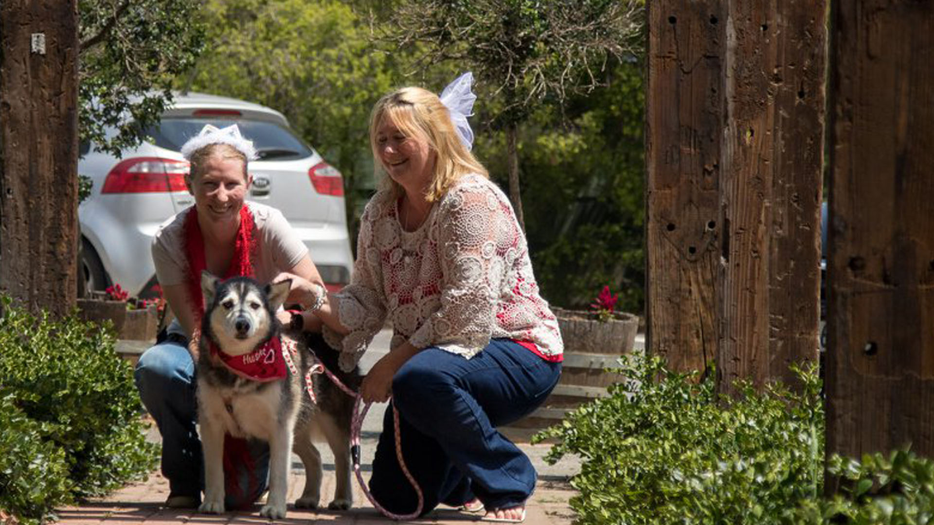 Valentines Celebrations 2018 Husky Rescue South Africa