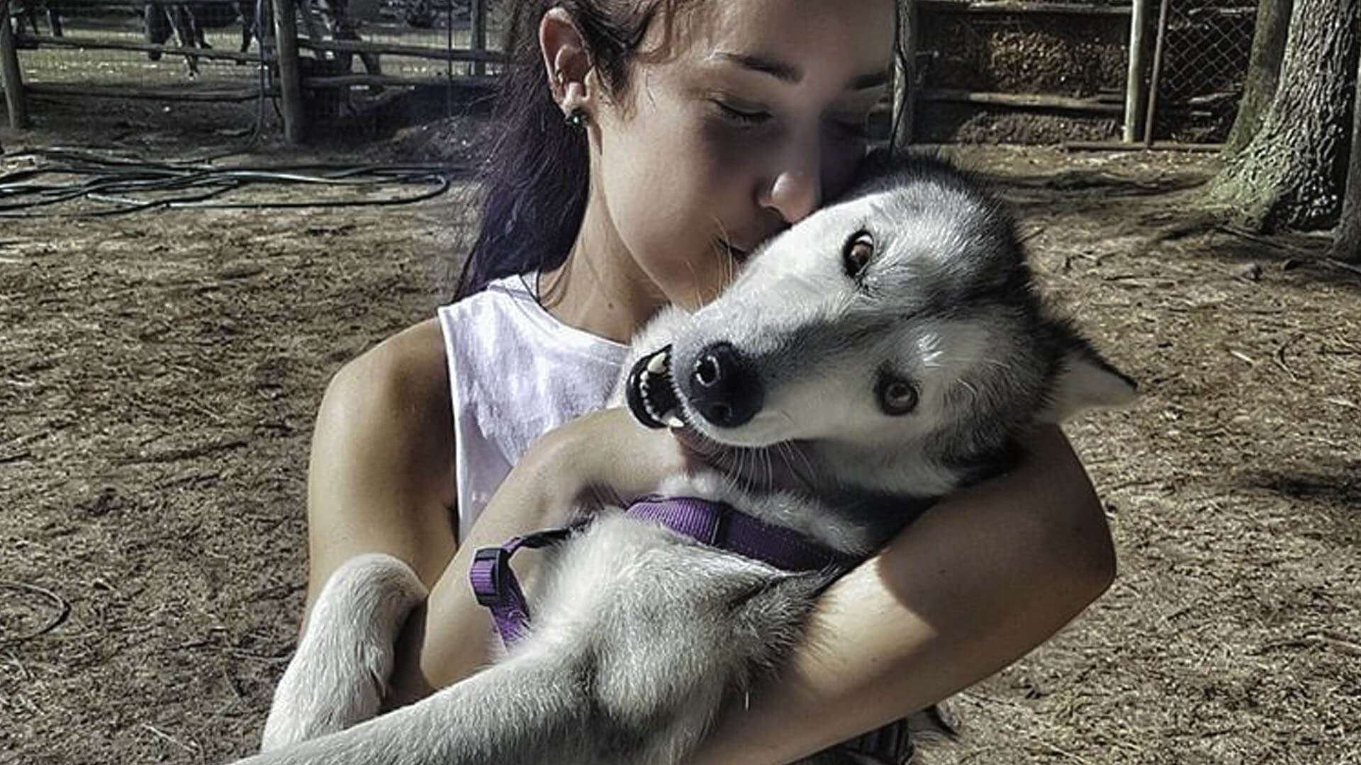 Adopt Lupin - Husky Rescue South Africa