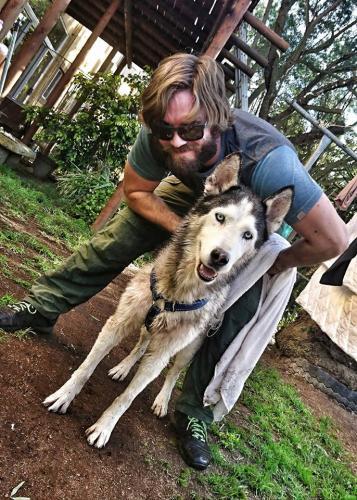 Adopt Chryso Husky Rescue South Africa
