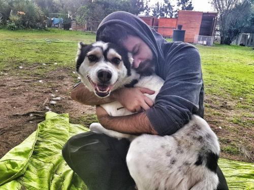 Adopt Santa Husky Rescue South Africa
